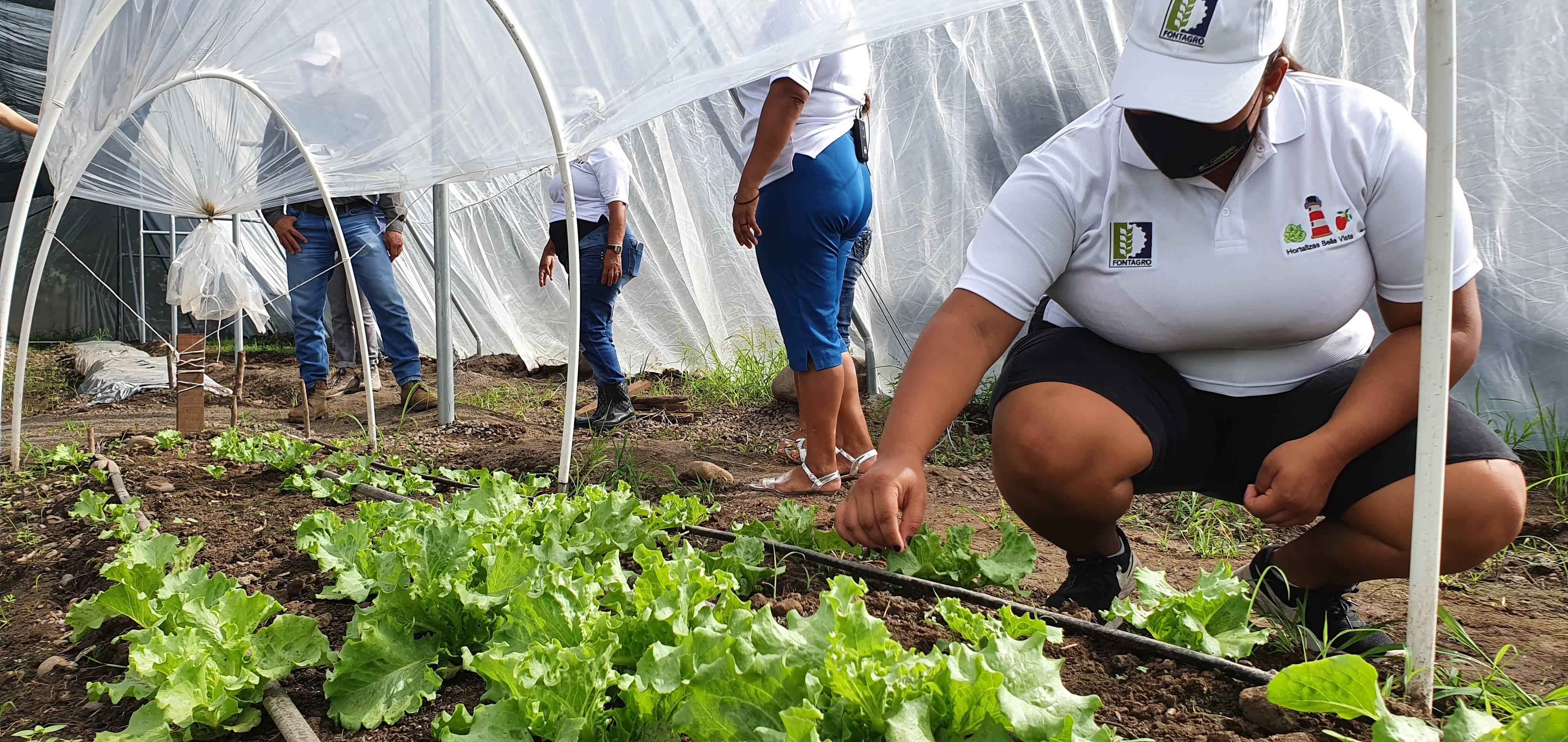 Producción y manejo de almácigos en hortalizas