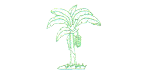 ASOCOPLA