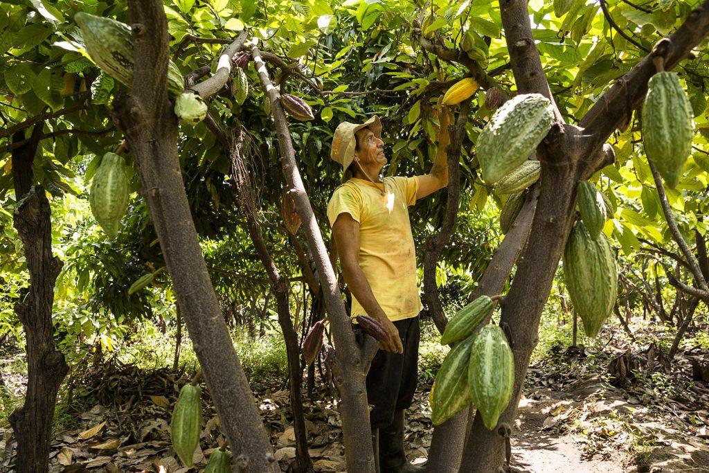 Clesenciano Chamba Acha, productos varios Piura.
