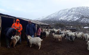 Intensificar ganadería